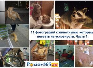 11 фотографий с животными, которым плевать на условности
