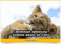 Смешные приколы кошки видео до слез