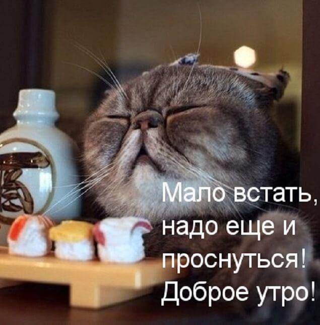 доброе утро смешное фото