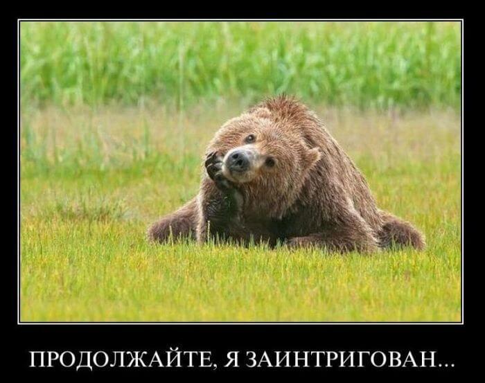 Открытки днем, медведь картинки прикольные с надписями