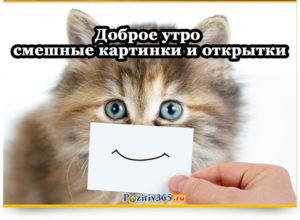 Доброе утро смешные картинки и открытки