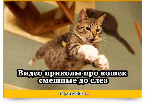 Видео приколы про кошек смешные до слез