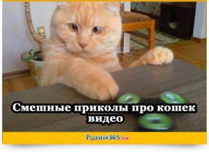 Смешные приколы про кошек видео