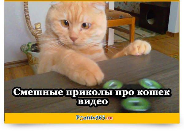 кошки приколы картинки