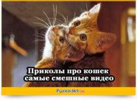 Бесплатные видео приколы самые смешные про кошек