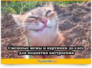 Смешные мемы и картинки до слез для поднятия настроения