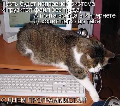 Оформление открытки, день программиста открытки с котом