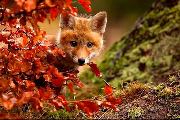 Открытки и картинки поздравления с осенью