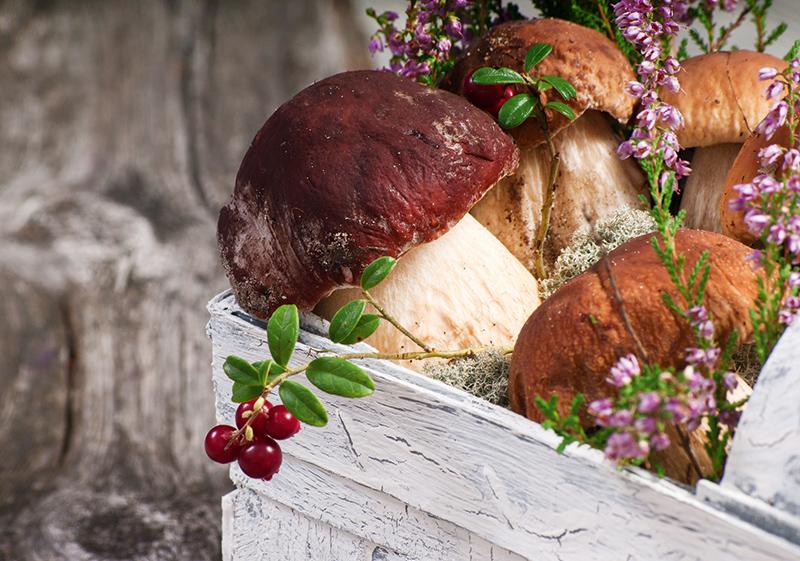 Открытки с днем рождения грибы, ураза